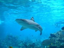 requin tourisme vert