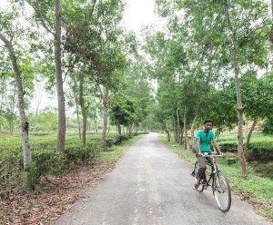 Man riding his bike on a road through tea estates near Sreemangal (Srimangal), Division of Sylhet, Bangladesh, Indian Sub-Continent, Asia